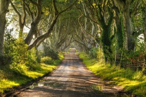 1.The-Dark-Hedges-in-Northern-Ireland-20-Magical-Tree-Tunnels-You-Should-Definitely-Take-A-Walk-Through