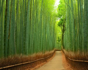 10.-Bamboo-Path-in-Kyoto-Japan-20-Magical-Tree-Tunnels-You-Should-Definitely-Take-A-Walk-Through