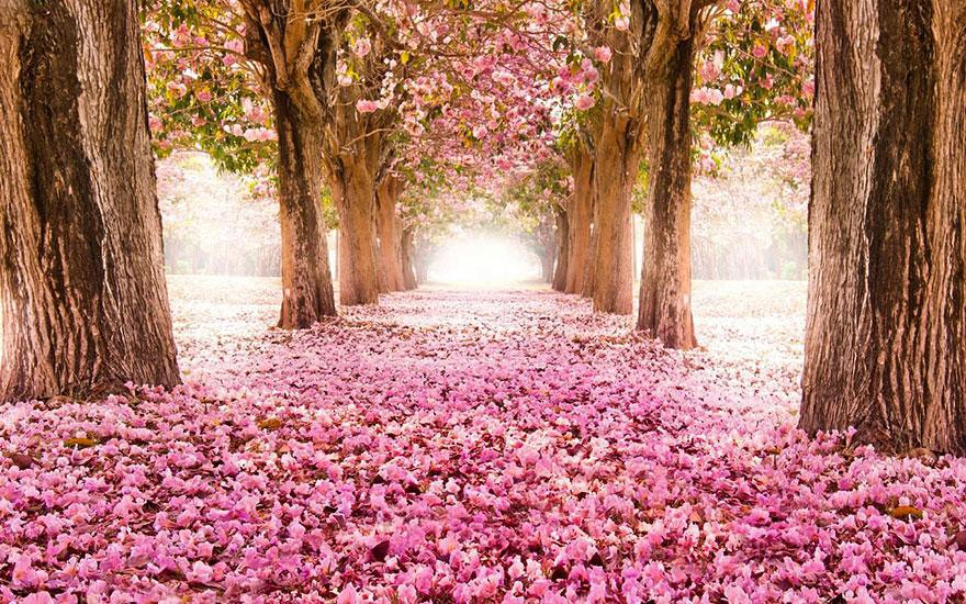 12-Blossom-Path-Location-Unknown