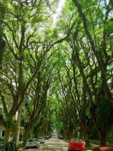 12.Street-in-Porto-Alegre-Brazil-20-Magical-Tree-Tunnels-You-Should-Definitely-Take-A-Walk-Through