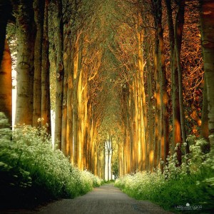 14.-Tree-Tunnel-in-Netherlands-20-Magical-Tree-Tunnels-You-Should-Definitely-Take-A-Walk-Through