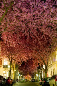 2.-Street-in-Bonn-Germany-20-Magical-Tree-Tunnels-You-Should-Definitely-Take-A-Walk-Through