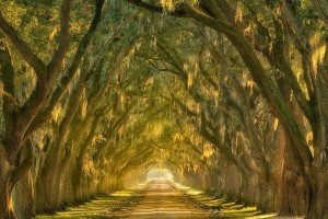 4.-Oak-Alley-along-the-Mississippi-River-outside-New-Orleans-Louisiana-20-Magical-Tree-Tunnels-You-Should-Definitely-Take-A-Walk-Through