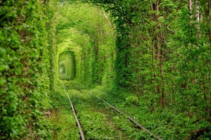 6.-Tunnel-of-Love-in-Ukraine-20-Magical-Tree-Tunnels-You-Should-Definitely-Take-A-Walk-Through
